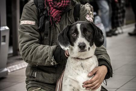 chien samu